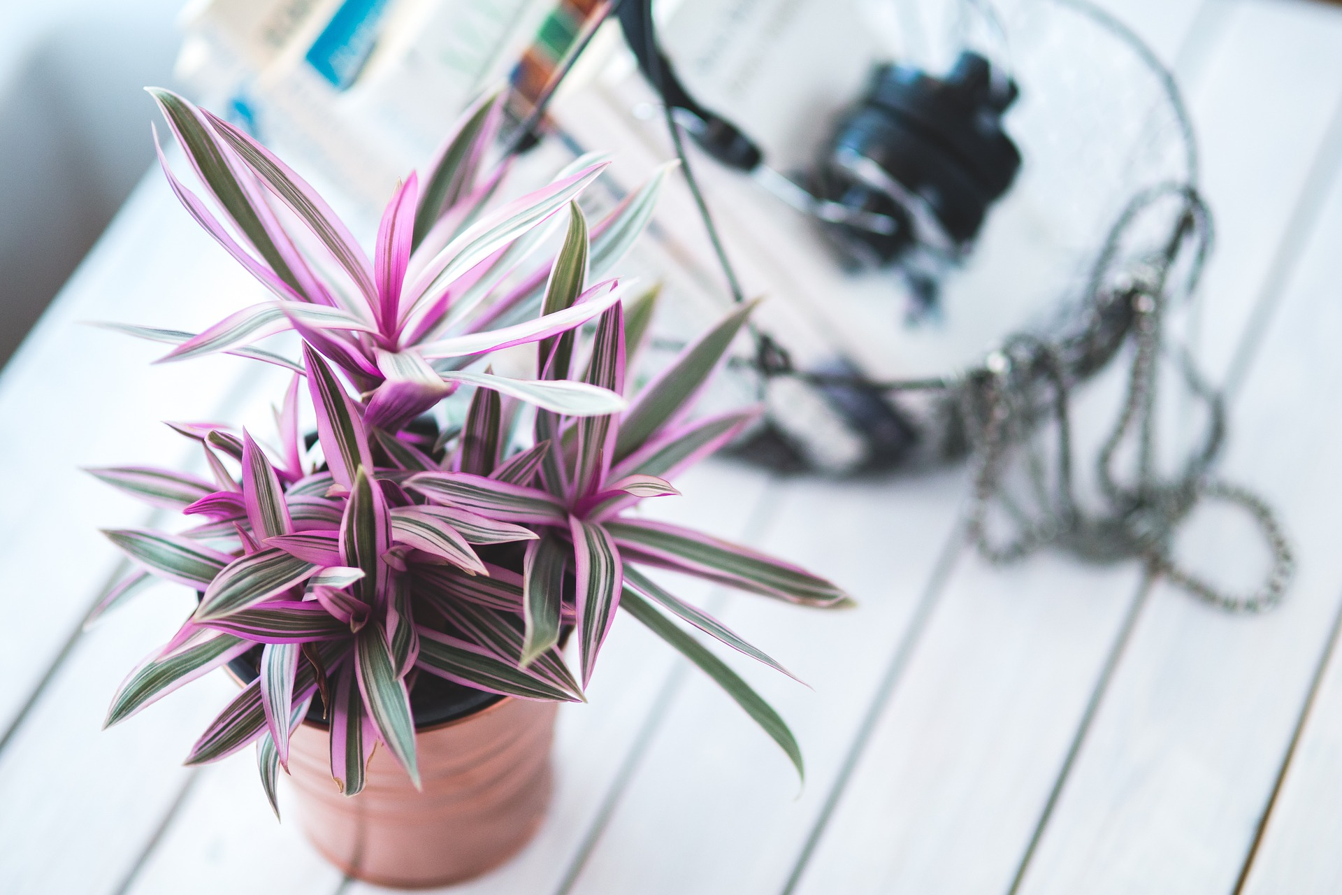 A Guide To Indoor Plants And Outdoor Plants For Small Spaces